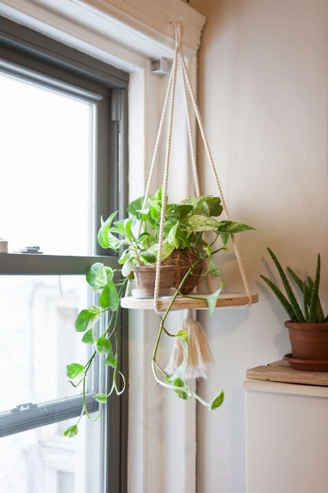 9 Hanging Plants For More Unique and Beautiful