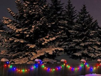 Outdoor Christmas Lights Decoration Ideas